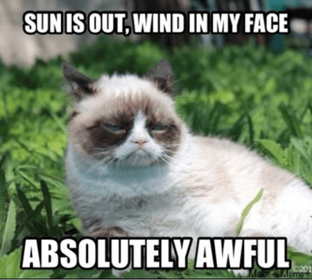cat-in-sun