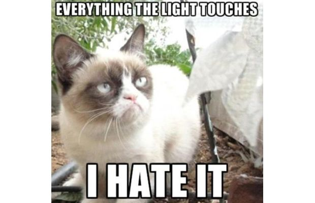 cat hating the light