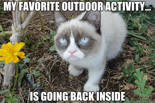 grumpy cat back inside
