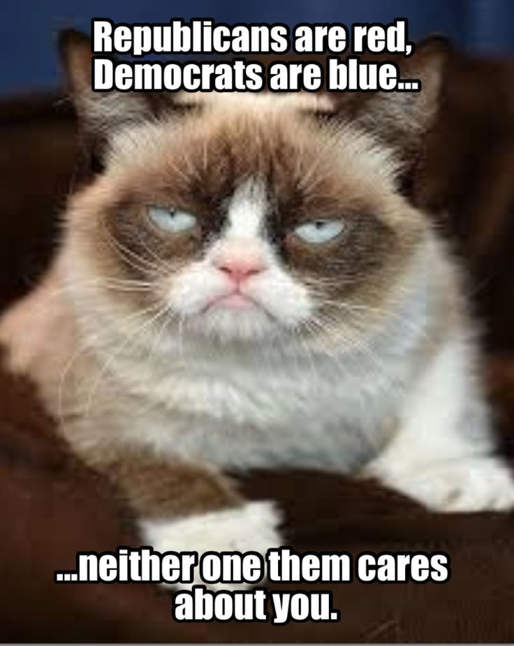 about politics 32 funny angry cat memes for any occasion freemake