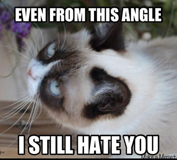 32 Funny Angry Cat Memes for Any Occasion - Freemake