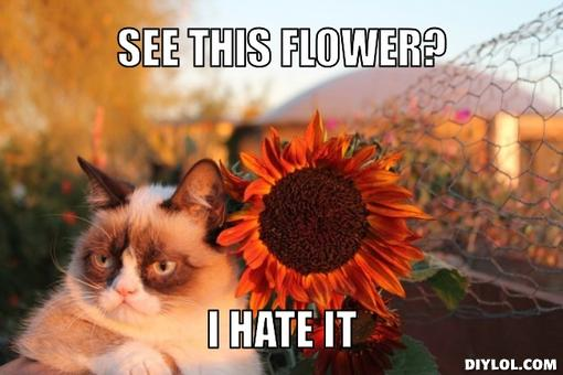 grumpy-cat-hate-flower