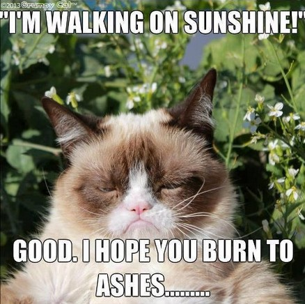 lol cat funny grumpy cat meme captioned images of animals 32 funny angry cat memes for any occasion freemake
