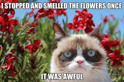 grumpy-cat-smelled-the-flowers