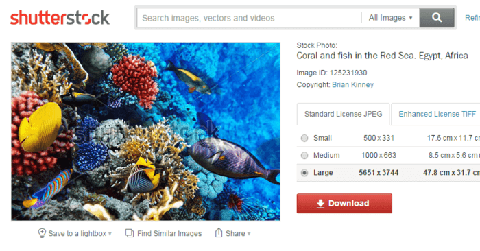 Free Images & Photos - 10 Sites Like Shutterstock - Freemake