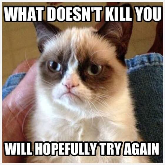 9 Best Grumpy Cat Memes 2 32 funny angry cat memes for any occasion freemake