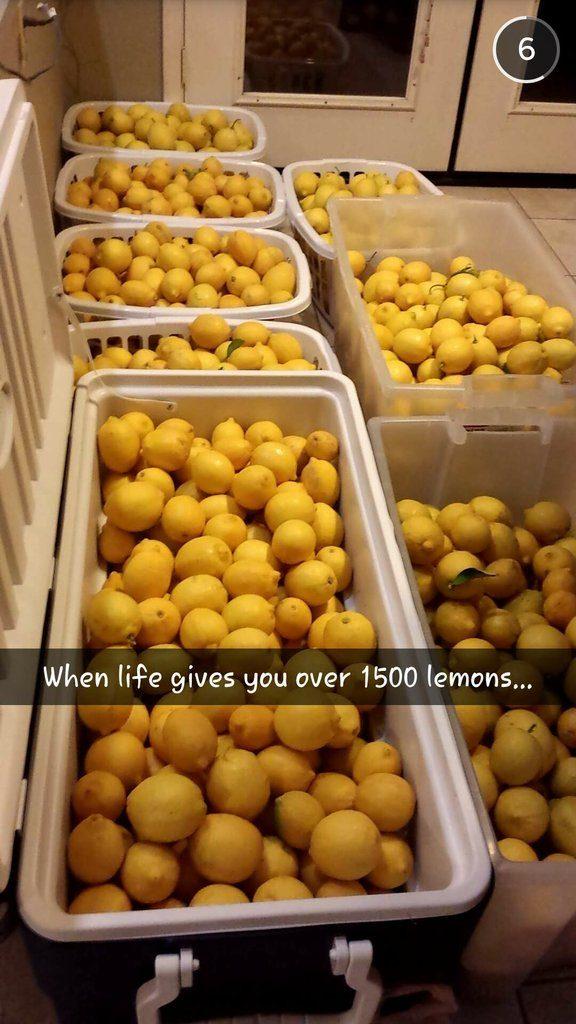 1500 lemons